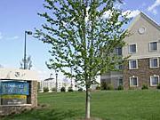 Staybridge Suites Charlotte - Ballantyne, NC - USA